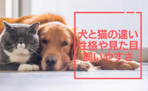夜鳴きが酷くて眠れない 猫の夜鳴きにジルケーンは効果があるの 副作用は大丈夫 猫は家族